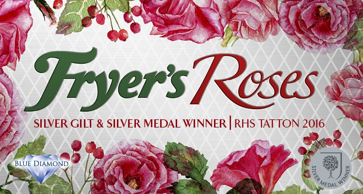 Fryer's Roses Awarded Silver and Best Show Feature at Tatton Park 2016