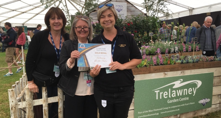 Gold for Blue Diamond at the Flower Show at the Royal Cornwall Show