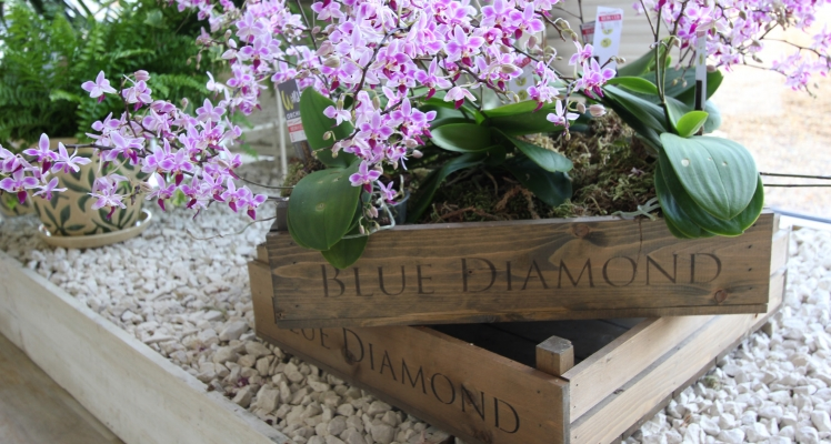 Blue Diamond Reports Record Profits for 2015