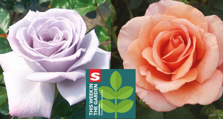 Jill Kerr Talks Fryer's Roses In The Garden