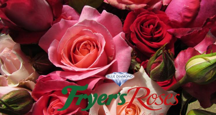 Celebration Roses