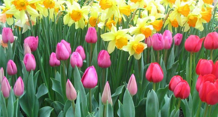 Spring Flowering Bulbs now in stock