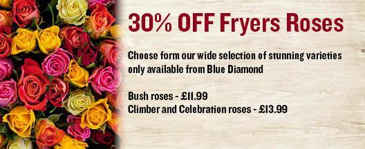 Fryers Roses