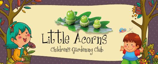 Little Acorns