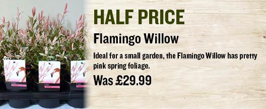 Flamingo Willow
