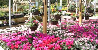 Wilton House Garden Centre