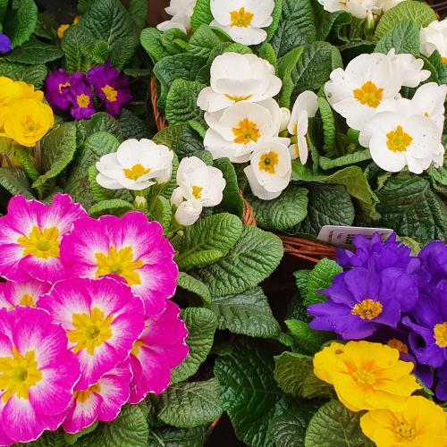 Plants at Sanders