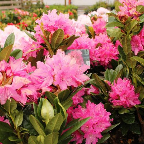 Plants at Newbridge