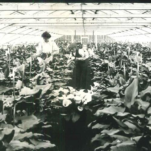 1889 - Seeds of Success