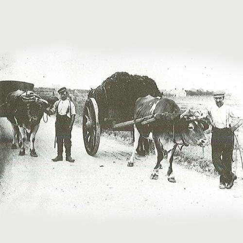 1910 - Early Organics